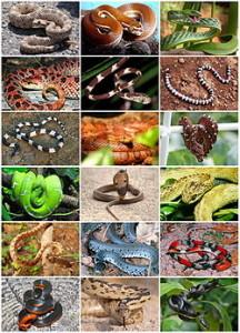 250px-Snakes_Diversity