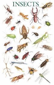 حشرات المنزل بالصور