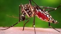 كيفية القضاء علي البعوض